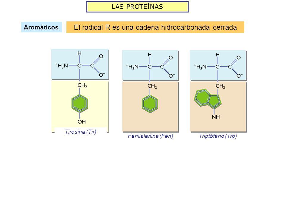 El radical R es una cadena hidrocarbonada cerrada