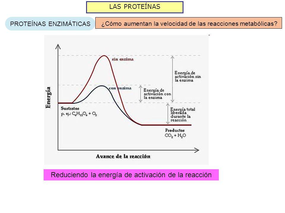 Reduciendo la energía de activación de la reacción