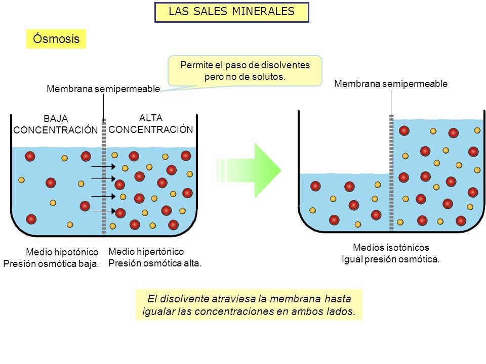 Ósmosis LAS SALES MINERALES