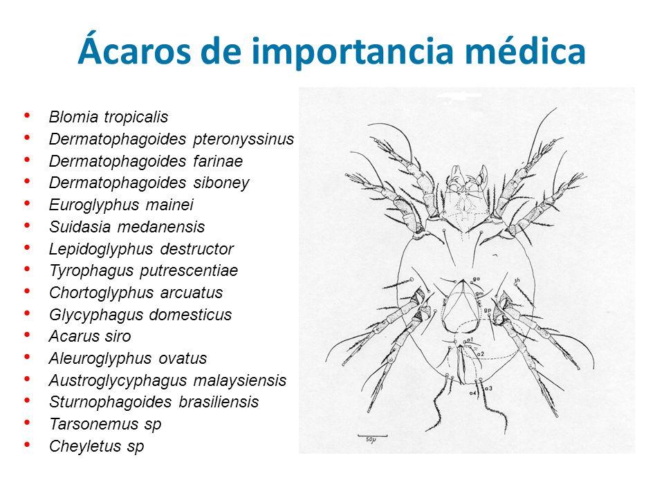 Ácaros de importancia médica