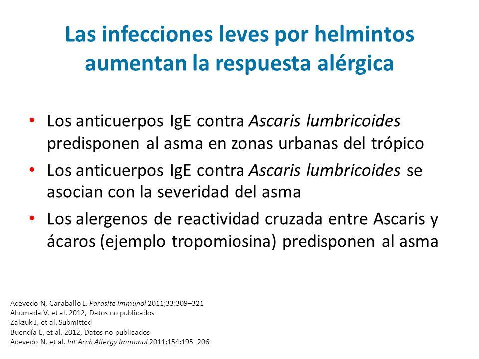 Las infecciones leves por helmintos aumentan la respuesta alérgica