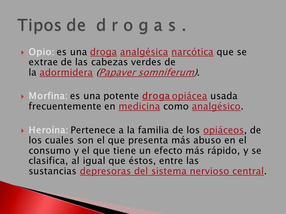 Tipos de d r o g a s . Opio: es una droga analgésica narcótica que se extrae de las cabezas verdes de la adormidera (Papaver somniferum).