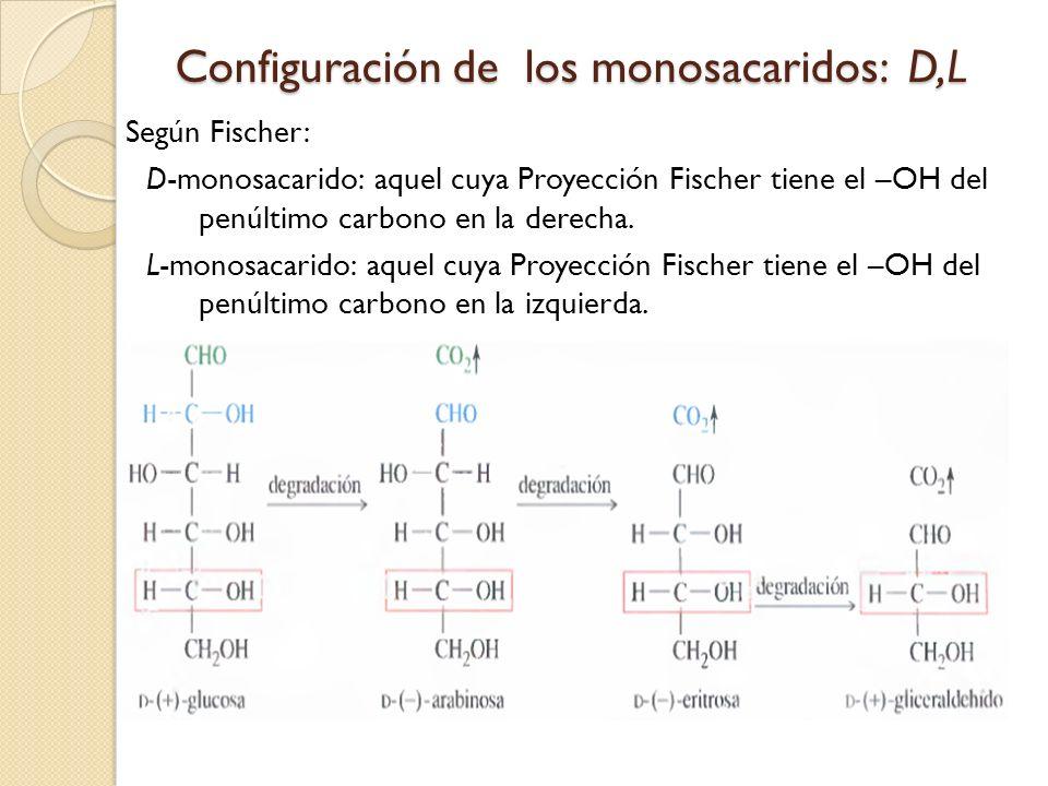 Configuración de los monosacaridos: D,L