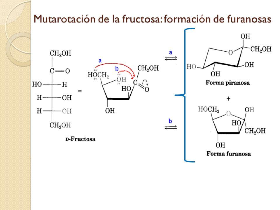 Mutarotación de la fructosa: formación de furanosas