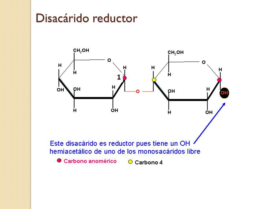 Disacárido reductor