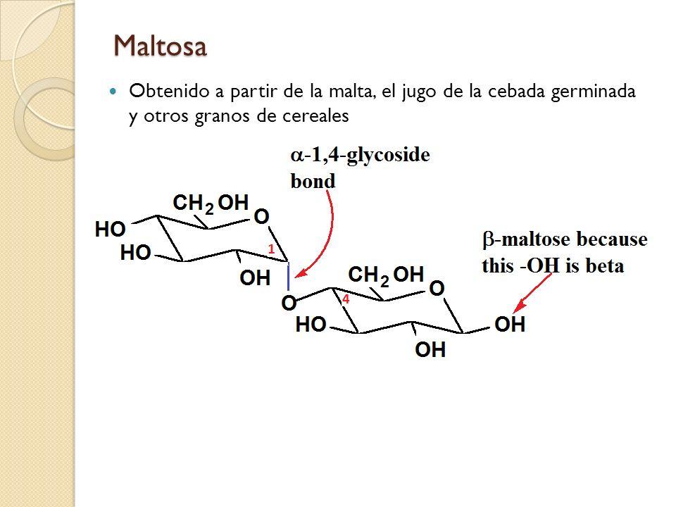 Maltosa Obtenido a partir de la malta, el jugo de la cebada germinada y otros granos de cereales. 56.