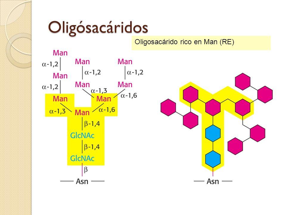 Oligósacáridos Oligosacárido rico en Man (RE) 66 66