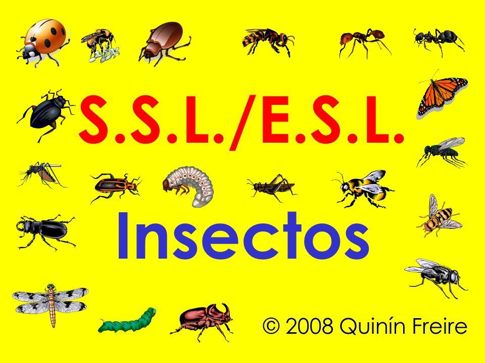 S.S.L./E.S.L. Insectos © 2008 Quinín Freire