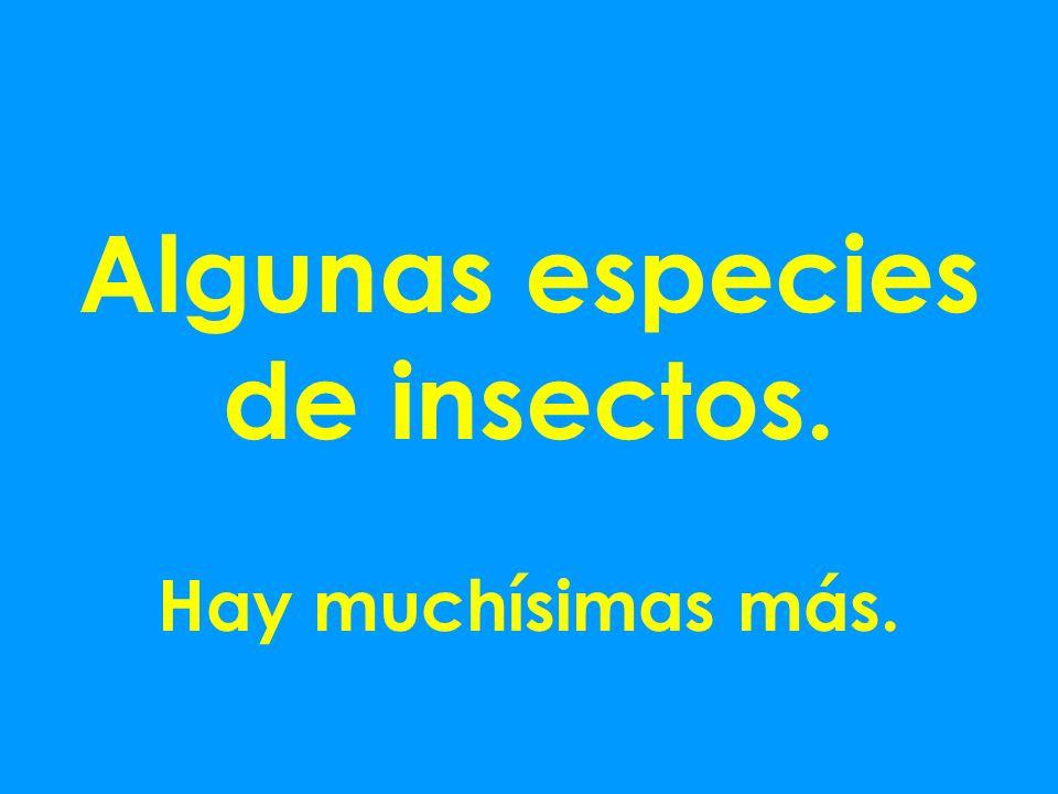 Algunas especies de insectos.