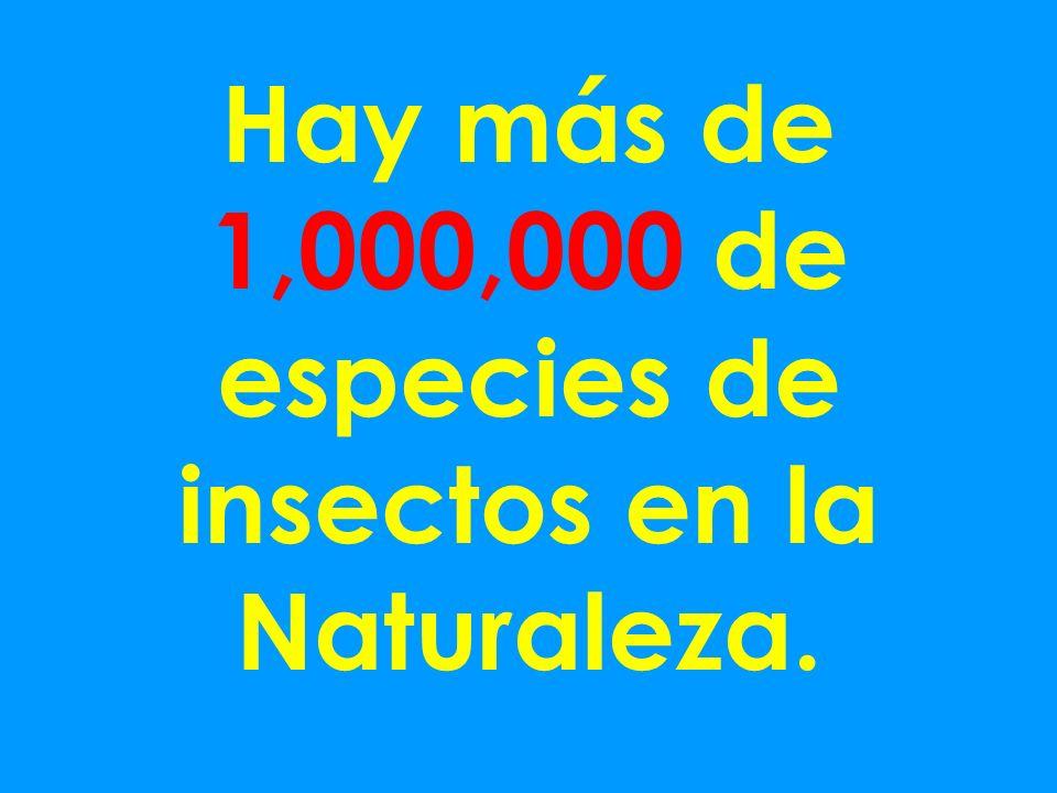 Hay más de 1,000,000 de especies de insectos en la Naturaleza.