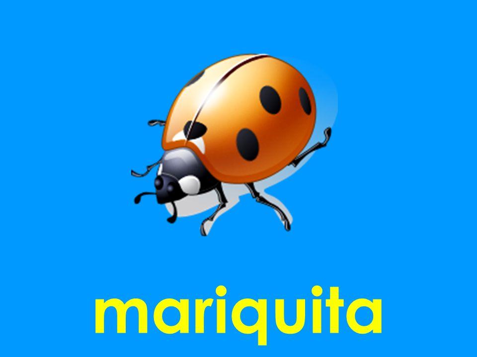 mariquita