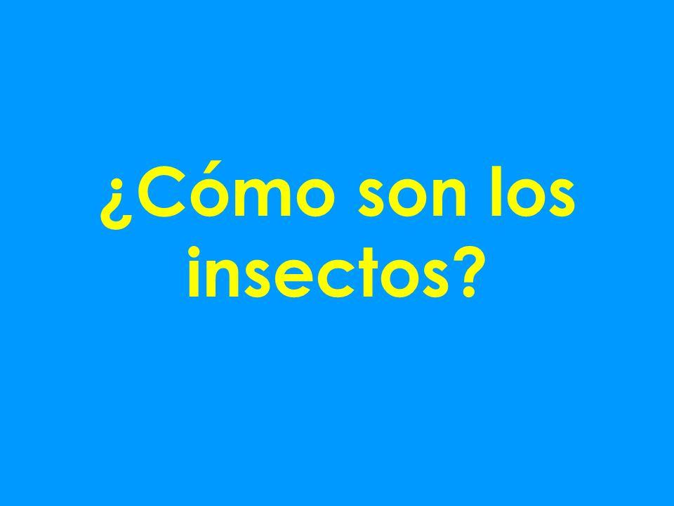 ¿Cómo son los insectos
