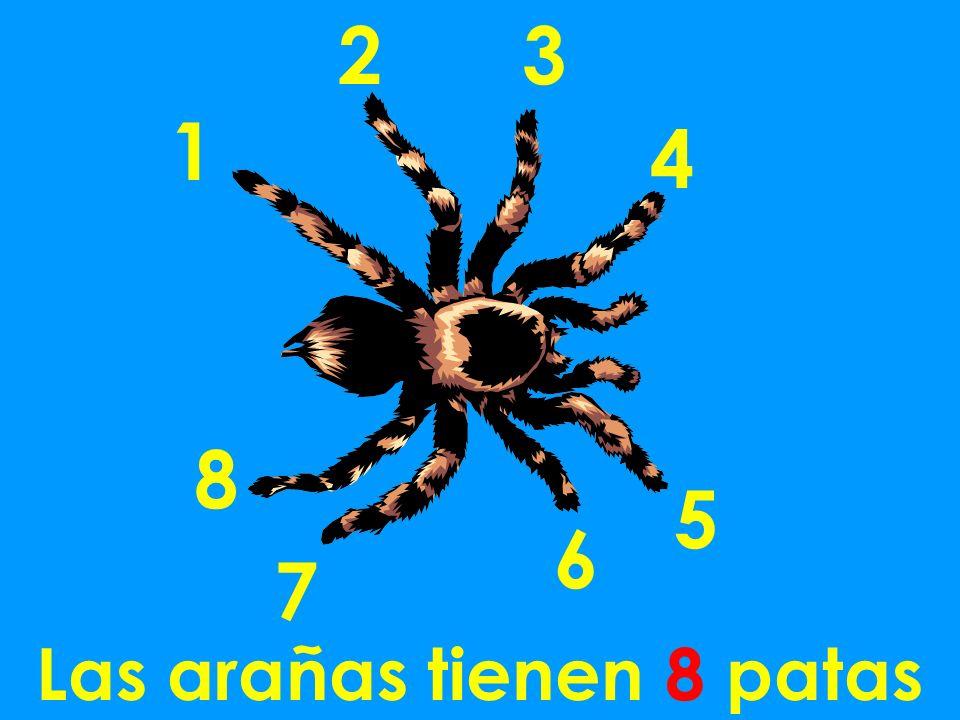 Las arañas tienen 8 patas