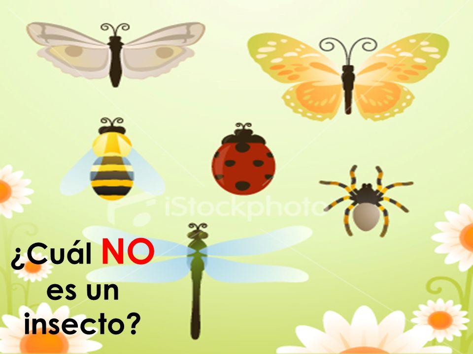 ¿Cuál NO es un insecto