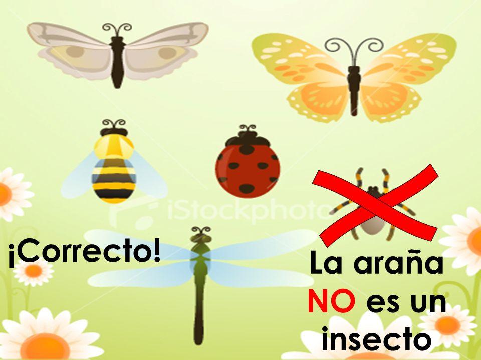 La araña NO es un insecto