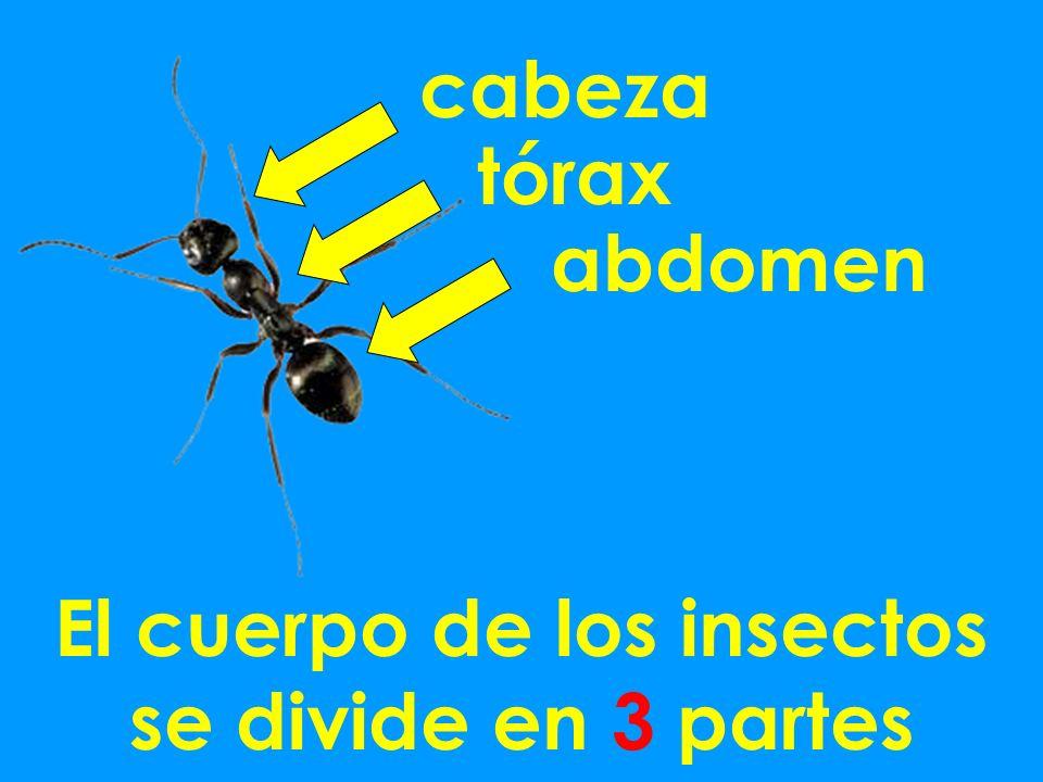 El cuerpo de los insectos se divide en 3 partes