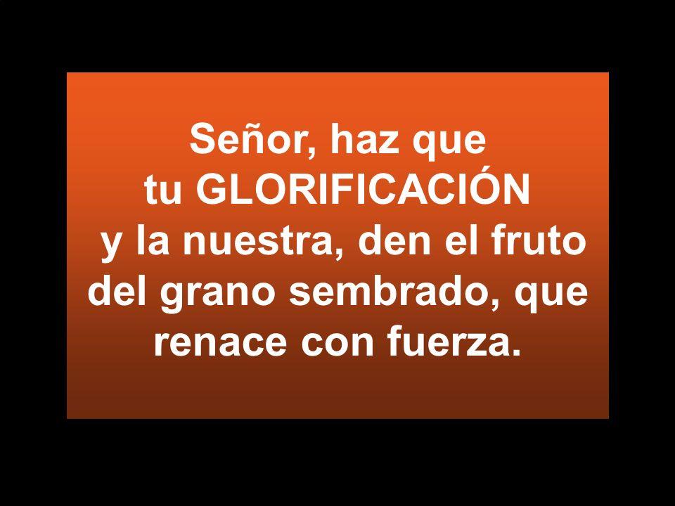 Señor, haz que tu GLORIFICACIÓN y la nuestra, den el fruto del grano sembrado, que renace con fuerza.