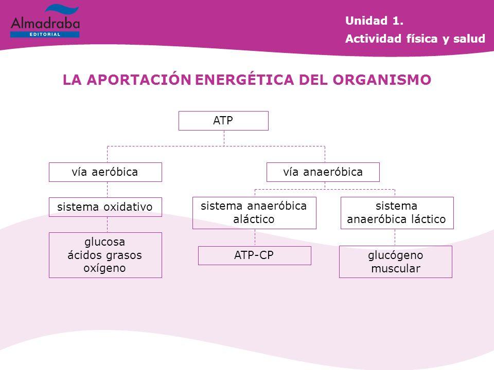 LA APORTACIÓN ENERGÉTICA DEL ORGANISMO