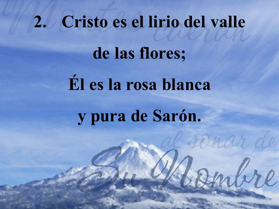 Cristo es el lirio del valle