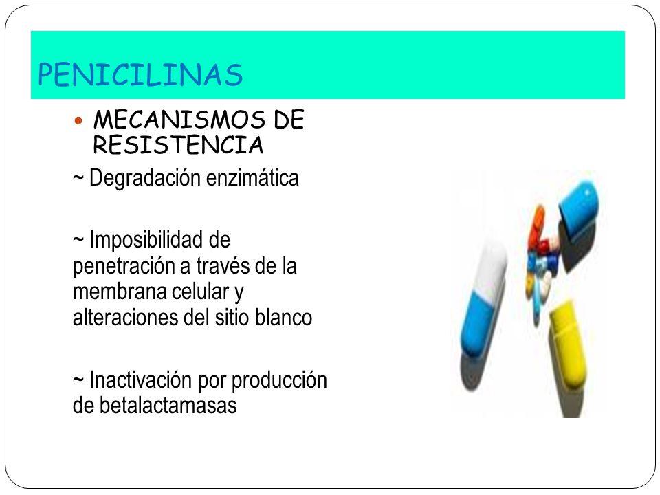 PENICILINAS MECANISMOS DE RESISTENCIA ~ Degradación enzimática