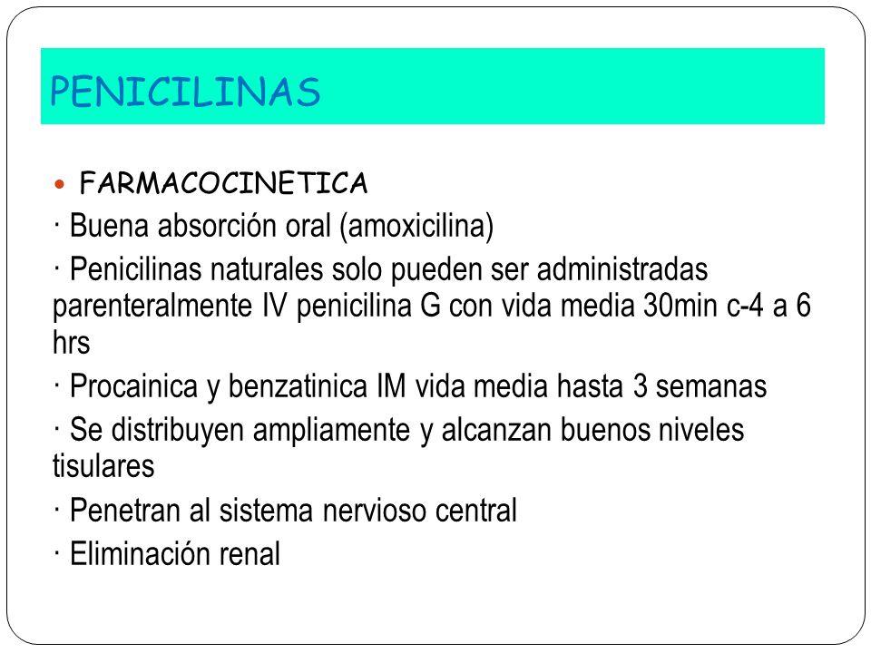 PENICILINAS · Buena absorción oral (amoxicilina)