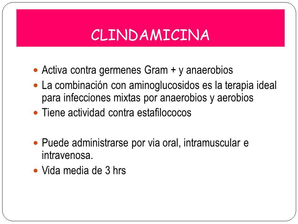 CLINDAMICINA Activa contra germenes Gram + y anaerobios