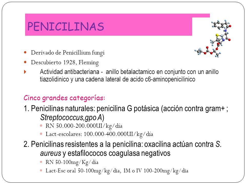 PENICILINAS Derivado de Penicillium fungi. Descubierto 1928, Fleming.