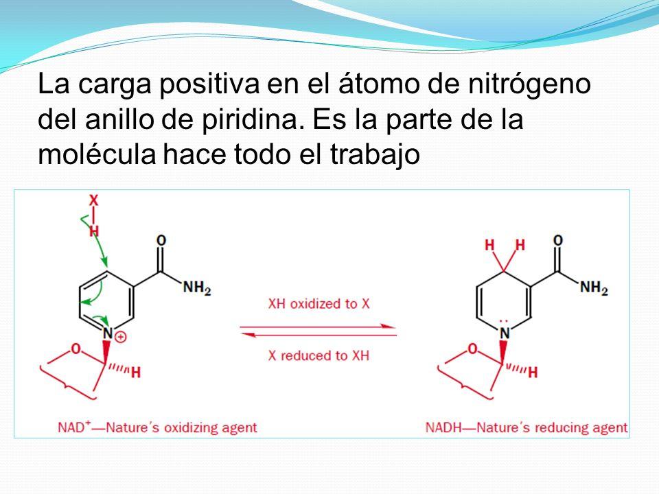 La carga positiva en el átomo de nitrógeno del anillo de piridina