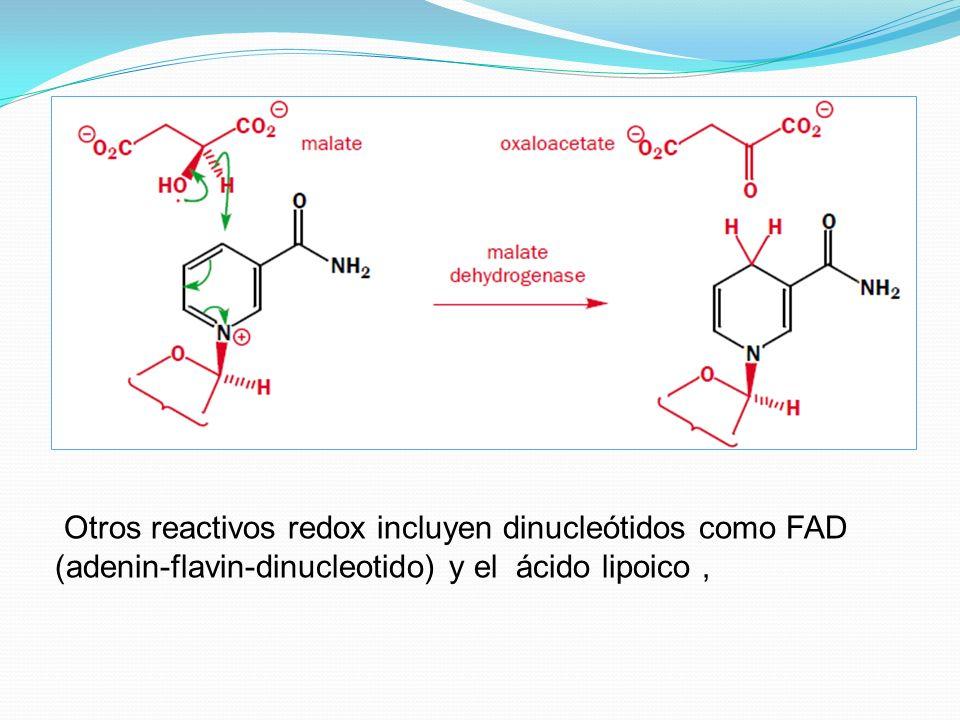 Otros reactivos redox incluyen dinucleótidos como FAD (adenin-flavin-dinucleotido) y el ácido lipoico ,