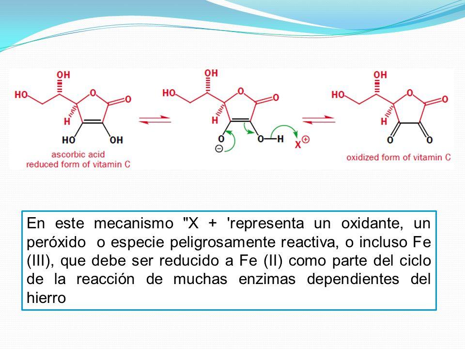 En este mecanismo X + representa un oxidante, un peróxido o especie peligrosamente reactiva, o incluso Fe (III), que debe ser reducido a Fe (II) como parte del ciclo de la reacción de muchas enzimas dependientes del hierro