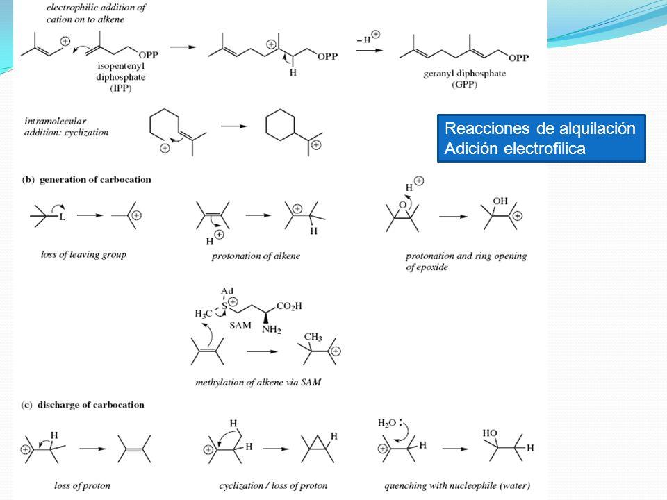 Reacciones de alquilación