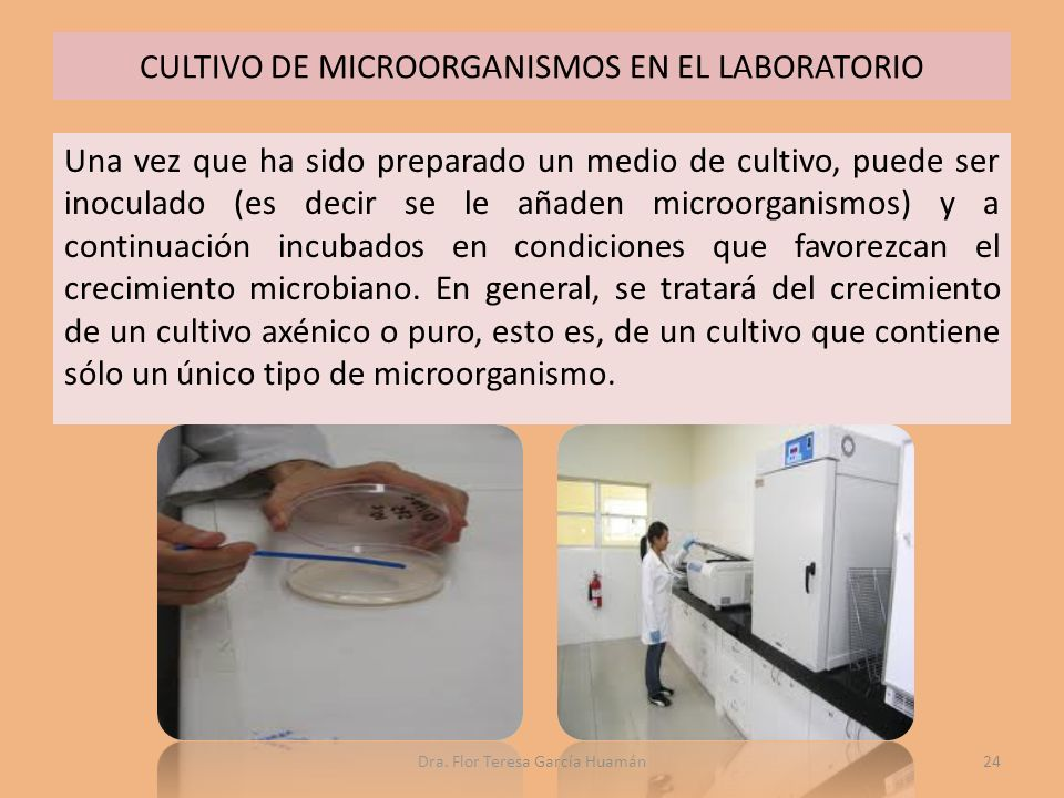 CULTIVO DE MICROORGANISMOS EN EL LABORATORIO