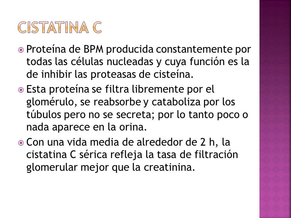 CISTATINA C Proteína de BPM producida constantemente por todas las células nucleadas y cuya función es la de inhibir las proteasas de cisteína.