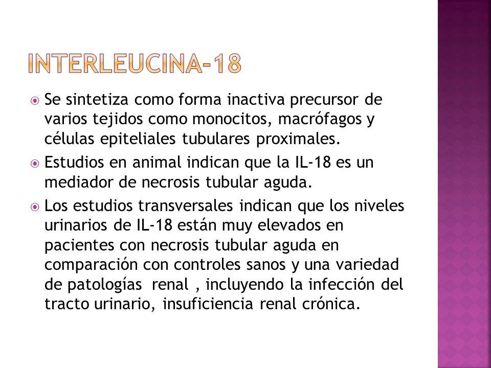 INTERLEUCINA-18 Se sintetiza como forma inactiva precursor de varios tejidos como monocitos, macrófagos y células epiteliales tubulares proximales.
