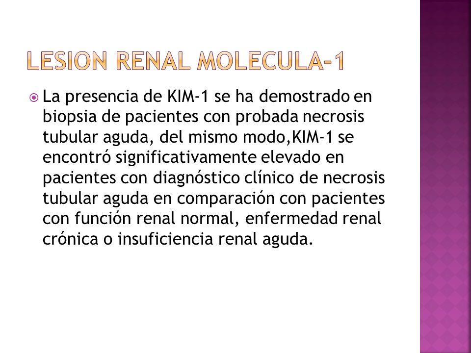 LESION RENAL MOLECULA-1