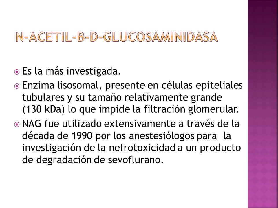 N-ACETIL-B-D-GLUCOSAMINIDASA