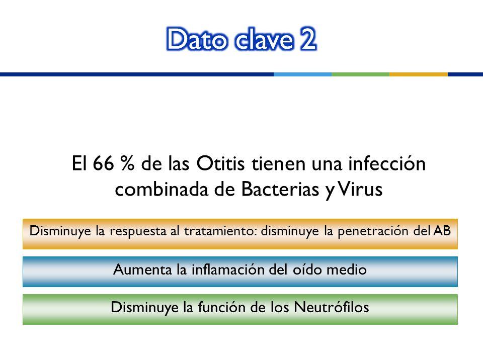 Dato clave 2 El 66 % de las Otitis tienen una infección combinada de Bacterias y Virus.