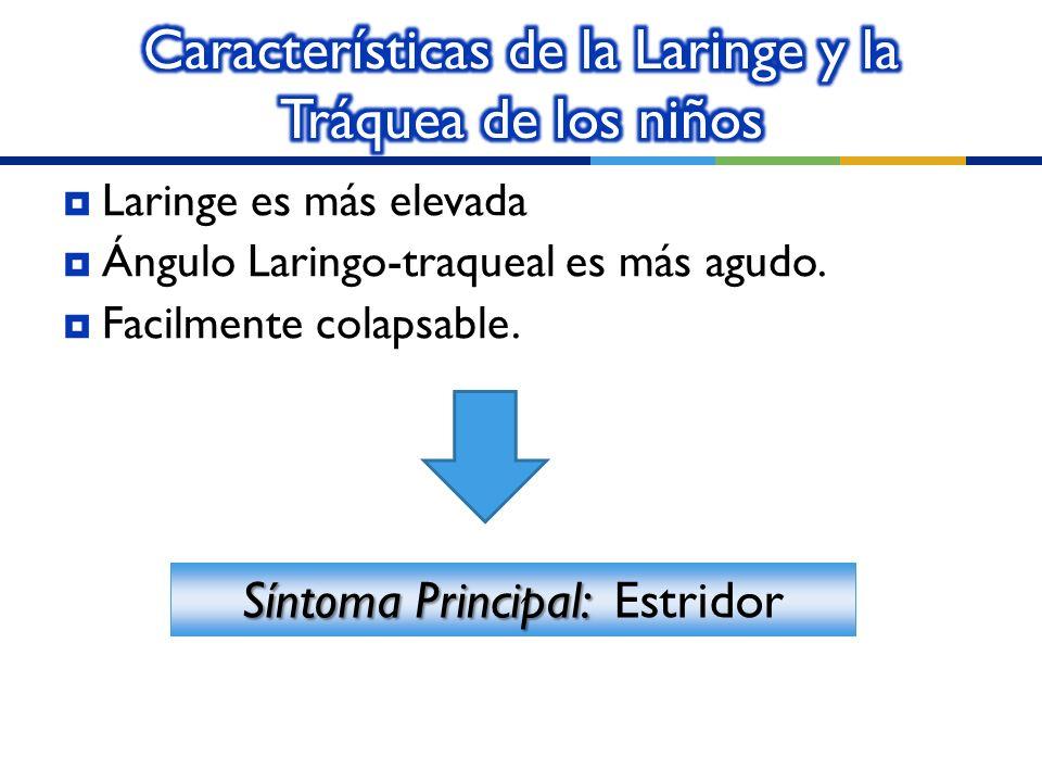 Características de la Laringe y la Tráquea de los niños