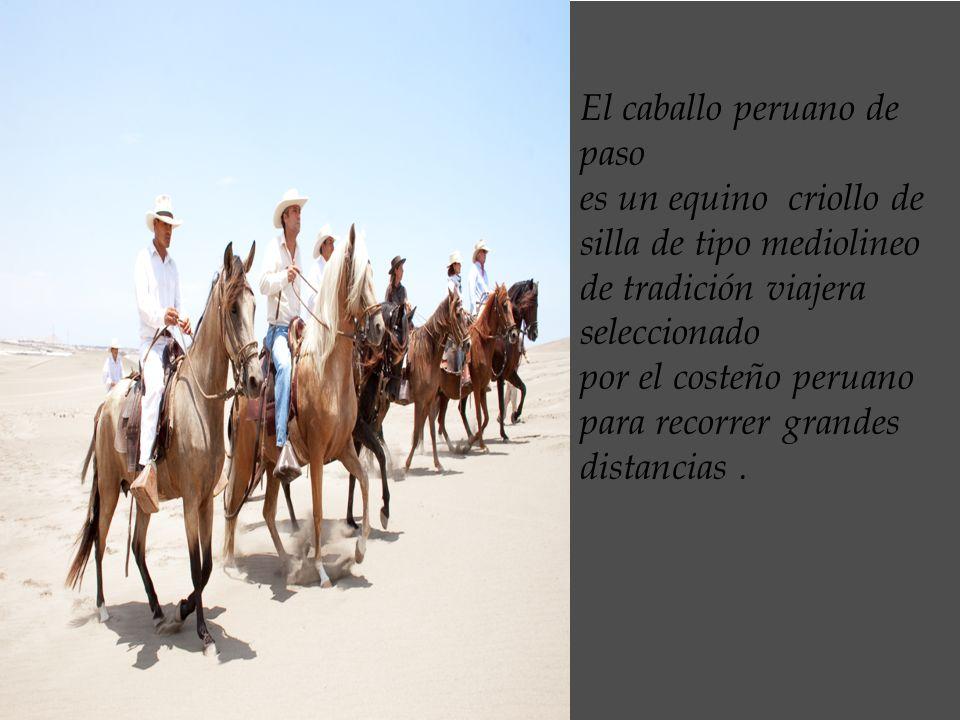 El caballo peruano de paso