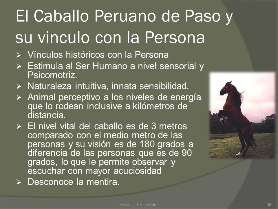 El Caballo Peruano de Paso y su vinculo con la Persona