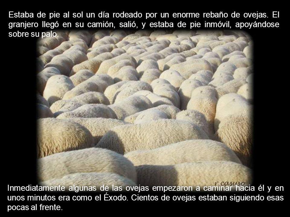 Estaba de pie al sol un día rodeado por un enorme rebaño de ovejas