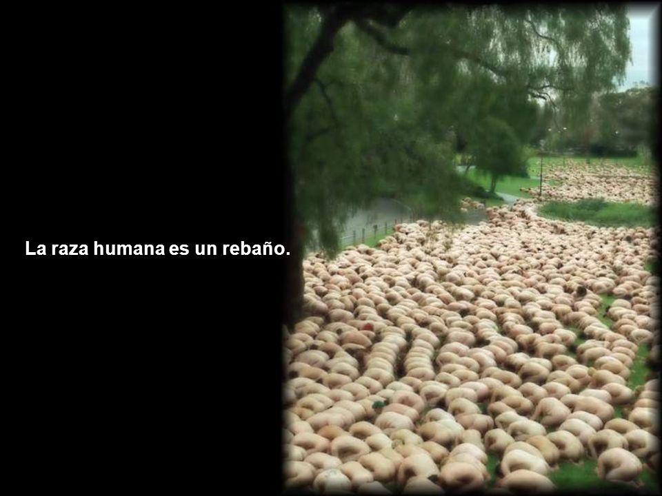 La raza humana es un rebaño.
