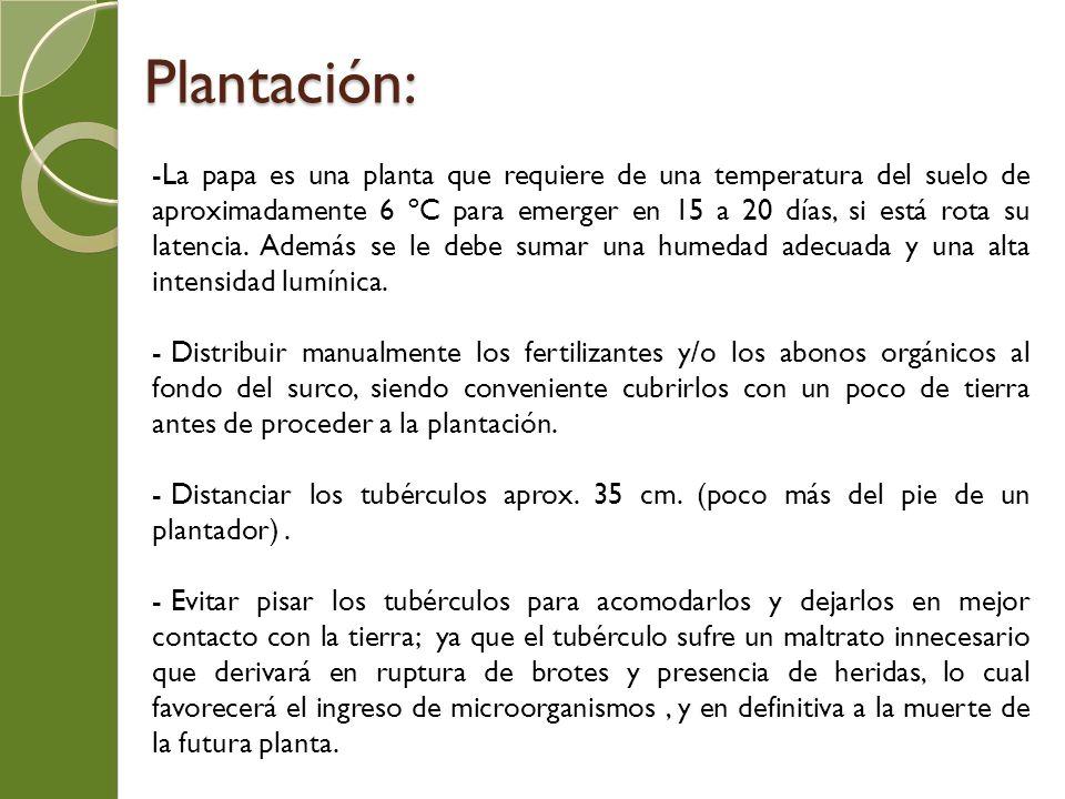 Plantación: