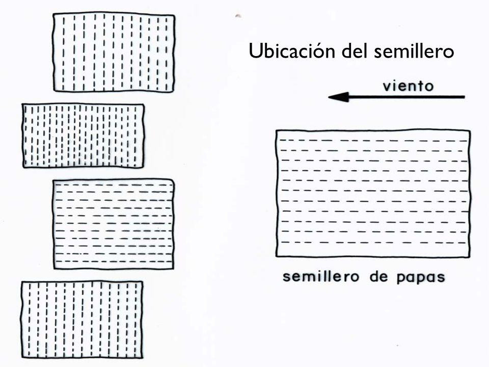 Ubicación del semillero