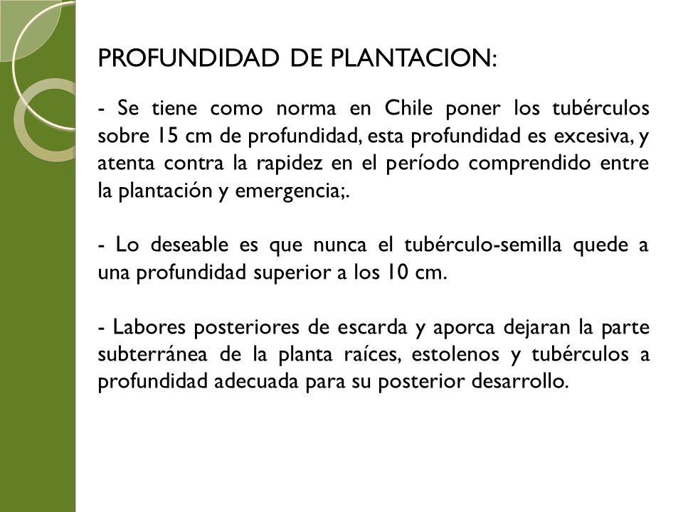 PROFUNDIDAD DE PLANTACION:
