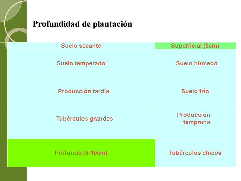 Profundidad de plantación