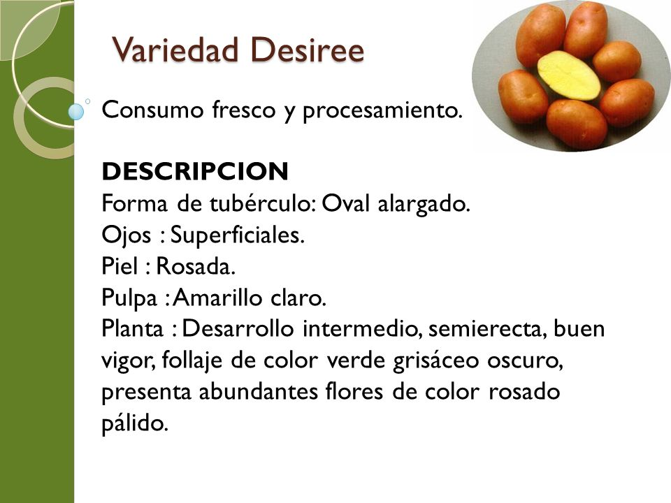 Variedad Desiree Consumo fresco y procesamiento. DESCRIPCION