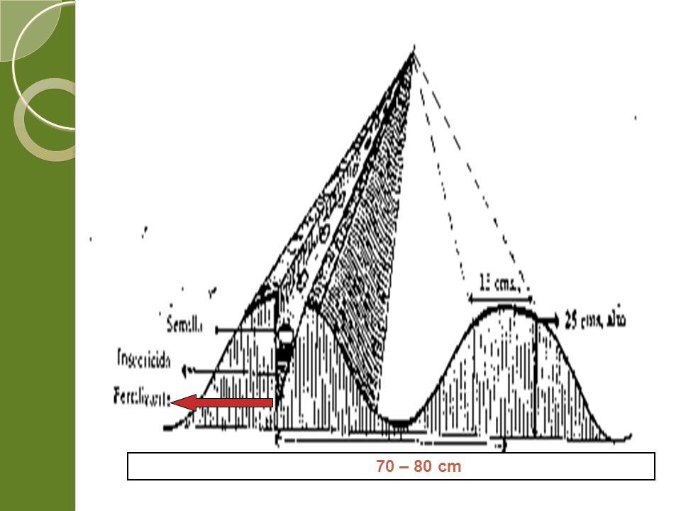 70 – 80 cm