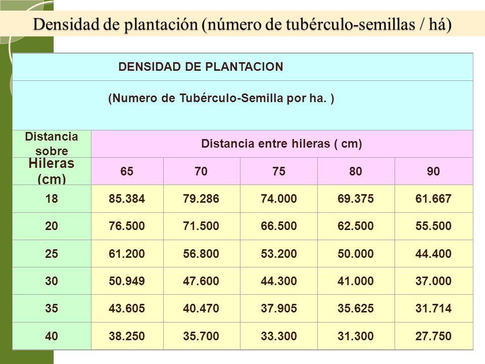 Densidad de plantación (número de tubérculo-semillas / há)