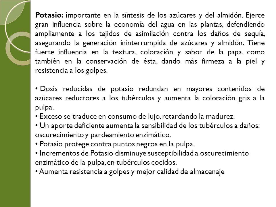 Potasio: importante en la síntesis de los azúcares y del almidón